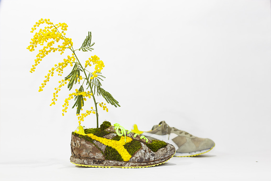 Monsieur Plant © 2015 • Mimowood • Diadora