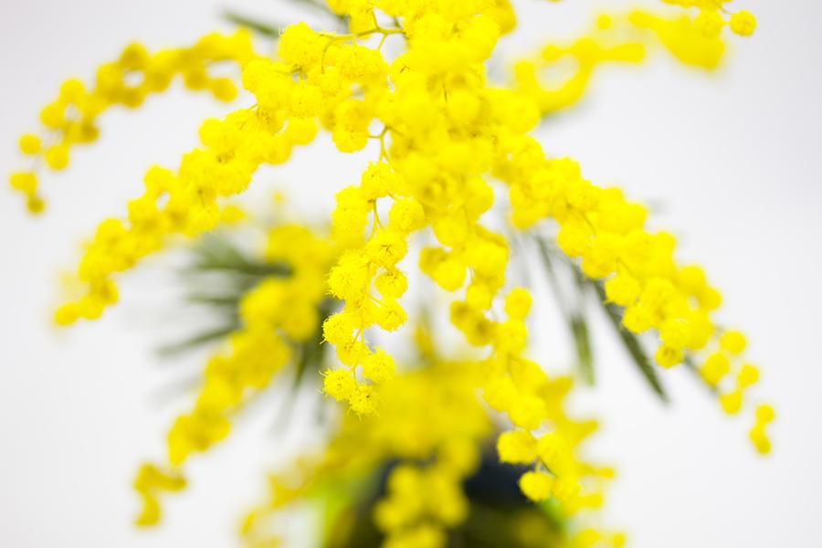 Monsieur Plant © 2015 • Vionnet Vs Mimosa • AnOther Magazine