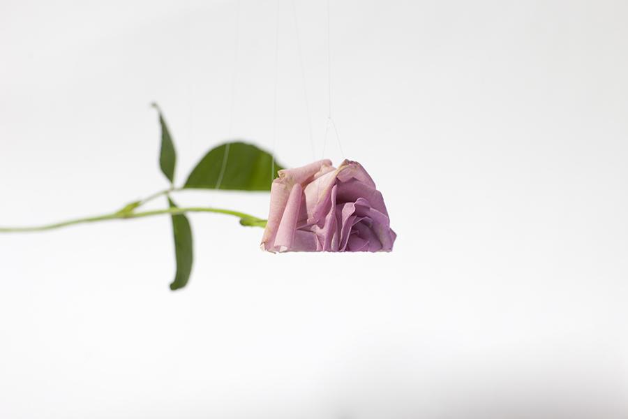 Monsieur Plant © 2015 • Betty ♡ • Soul