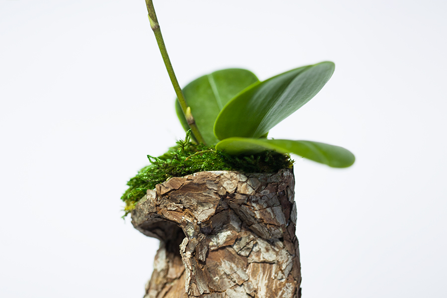 Monsieur Plant © 2016 • Orchid Spray • Collab / Tieri Trademark + Monsieur Plant