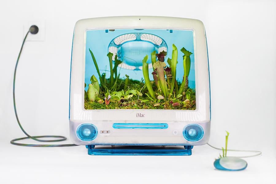 Monsieur Plant © 2017 • Plant your Mac! • Macarnivor • Imac G3 / 1998 • Dionaea / Drosera / Pinguicula