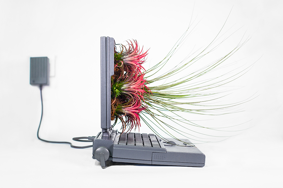 Monsieur Plant © 2017 • Plant your Mac! • Macfire • Powerbook / 1991 • Tillandsia