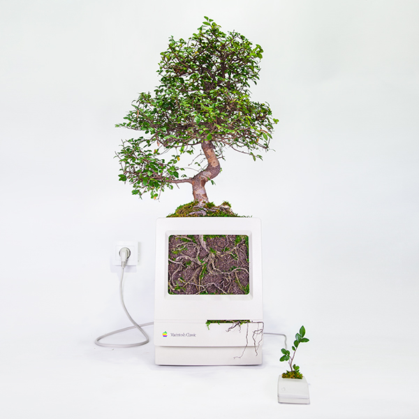 Monsieur Plant © 2017 • Plant your Mac! • Macbonsaï • Macintosh Classic / 1990 • Ulmus parvifolia / 16 years